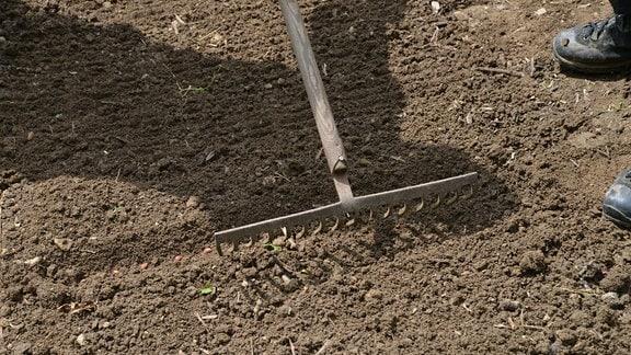 Mit einem Rechen wird auf einem Beet eine Pflanzrinne mit Bohnensamen geschlossen.