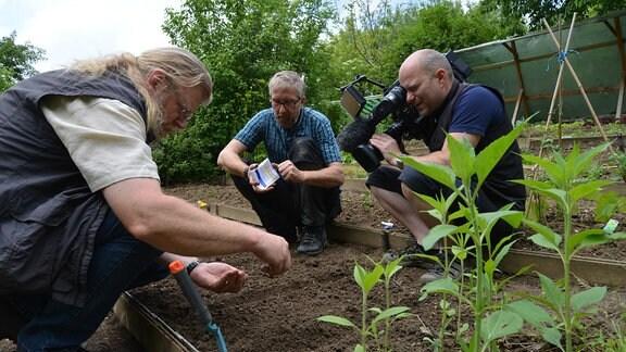 Jörg Heiß arbeitet mit Gemüseexperten Krummbein hockend an einem Beet und setzt Bohnensamen in die Erde. Ein Kameramann hockt daneben und filmt.