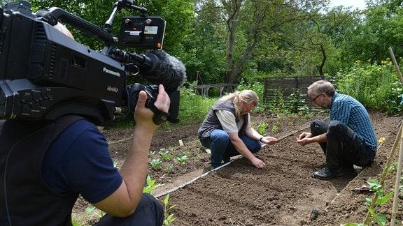 Ein Kameramann filmt Jörg Heiß und Martin Krumbein beim Samen setzen.