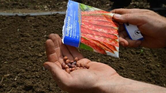 Eine Samentüte mit einem Foto von roten Bohnen. Aus der Tüte werden Bohnen in eine Hand geschüttet.