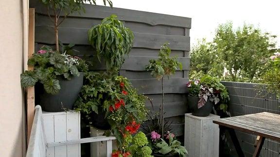 Üppige Pflanzen auf Martins Balkon im Sommer.