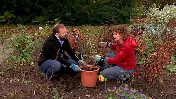 Brigitte und Jens hocken vor einem Rosenkübel im Beet