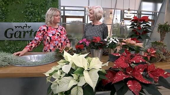 Diana Fritzsche-Grimmig im Gespräch mit Floristmeisterin Kathrin Katt