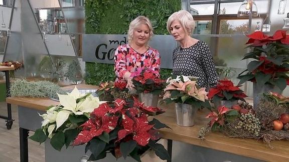 Diana und Kathrin sprechen über Weihnachtssterne