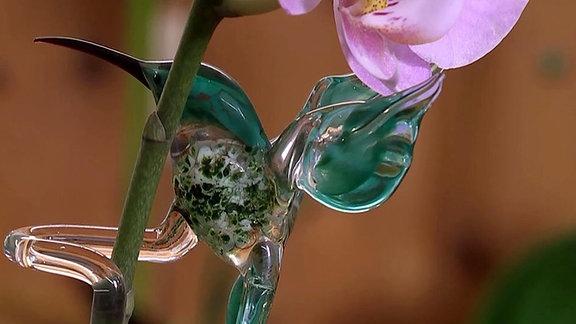Glasvögel