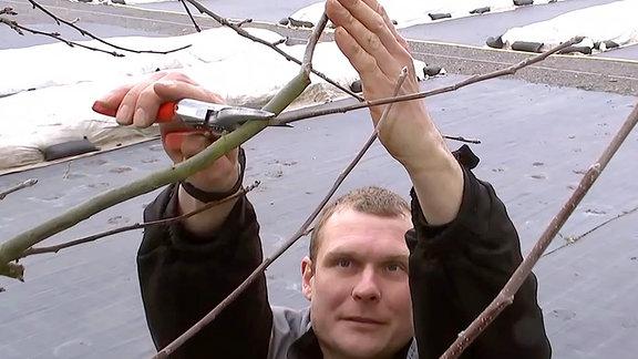 Ein Mann schneidet einen Zweig von einem Baum ab.