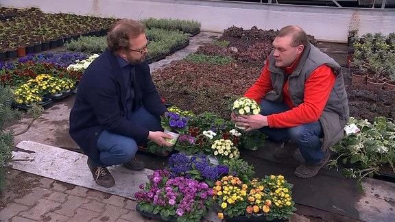 MDR Garten - Gespräch Klenart - Primeln