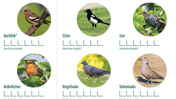 verschiedene Gartenvögel auf einer Liste