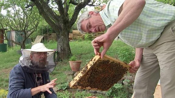 Zwei Männer betrachen einen Wabenrahmen mit Bienen.