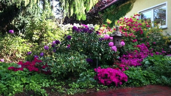 Blühende Sträucher