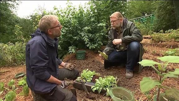 Pflanzenexperte Martin Krumbein gibt Tipps zur Pflanzung von Salat
