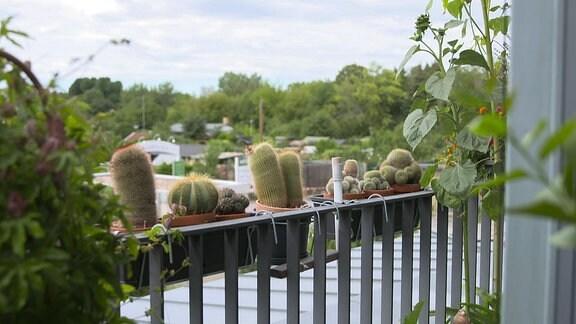 Kakteen und andere Pflanzen auf einem Balkon