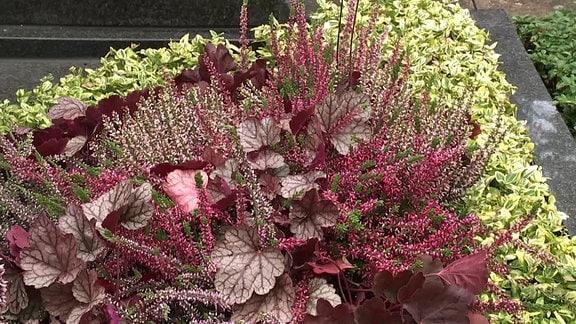 Grabpflanzen