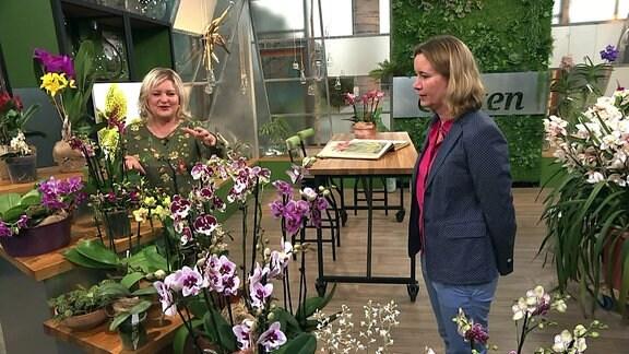 Diana Fritzsche-Grimmig mit Orchideen-Expertin Marei Karge-Liphard betrachten verschiedene Orchideen.
