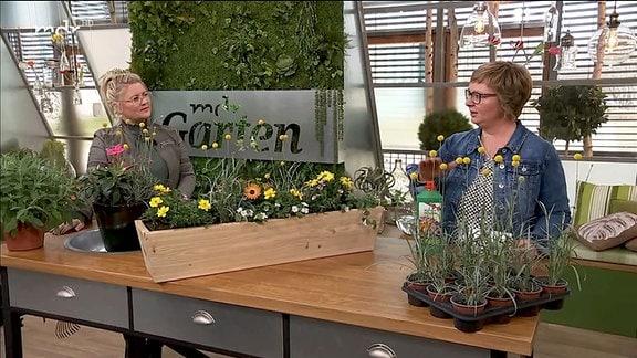 Floristmeisterin Antje May im Studiogespräch