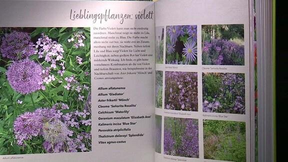 MDR Garten - Buchtipp
