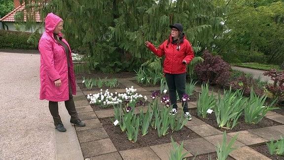 MDR Garten - Iris-Pflege mit Melanie Trinks
