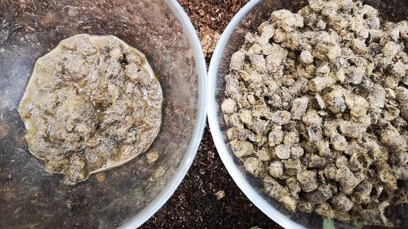 Schafwoll-Pellets in zwei Schälchen. Die Peletts in einem Schälchen wurden mit Wasser aufgegossen, sie sind aufgequollen.