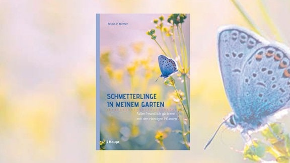 Cover: Schmetterlinge in meinem Garten