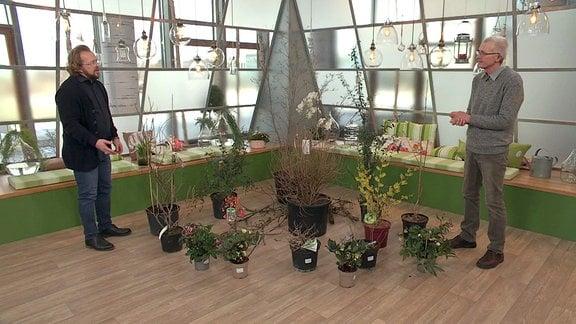 Männer neben Pflanzen