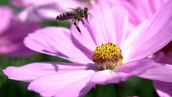 Insekt, Pflanze