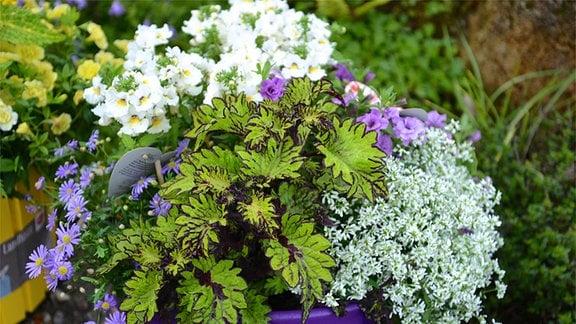 Blumentopf mit verschiedenen Pflanzen
