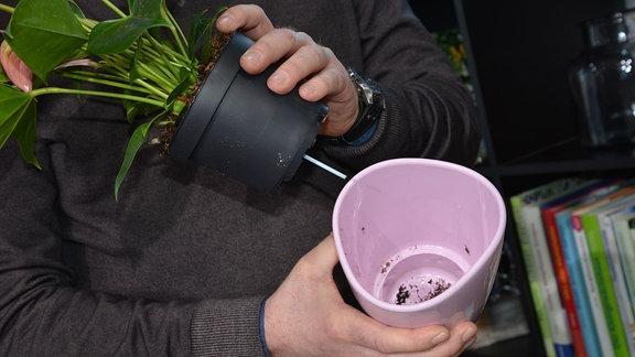 Hände zeigen, wie ein Bewässerungssystem funktioniert. Aus einem Blumentopf ragt ein kleiner Stab oder Docht, der die Pflanze mit Wasser versorgt.