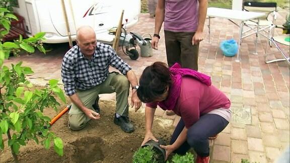 Ein Mann und eine Frau pflanzen