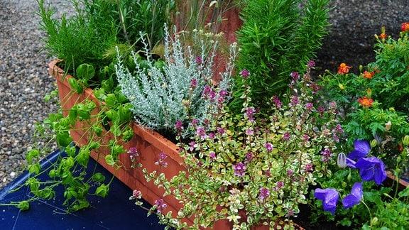 Balkonkasten mit Kräutern und essbaren Blumen