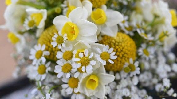 Blumenstrauß mit Kamille und einer Narzissen-Art