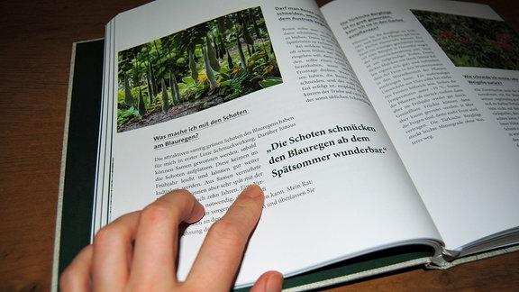 """Blick ins Buch """"Das grüne Telefon"""" von Horst Schöne"""