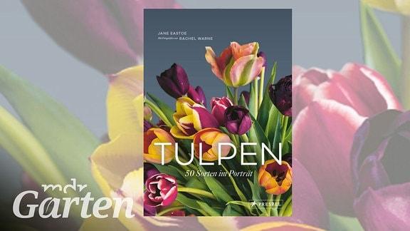 Buchcover Tulpen - 50 Sorten