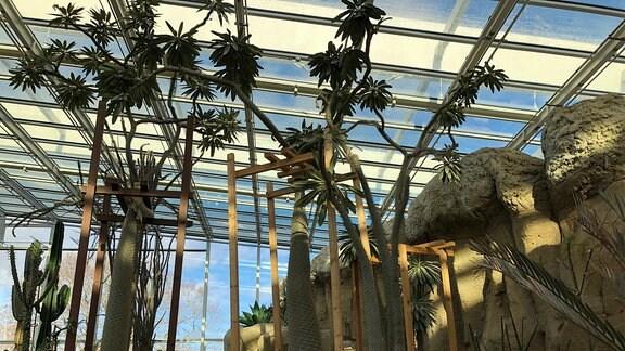 Pflanzen  im Danakil-Haus im egapark Erfurt