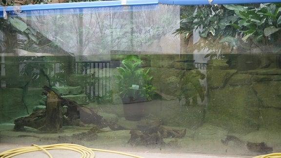 Teich im Regenwaldhaus des Danakil-Hauses