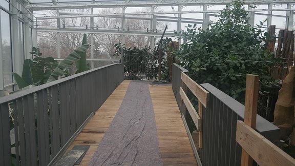 Baumkronenpfad im Regenwaldhaus des Danakil-Hauses