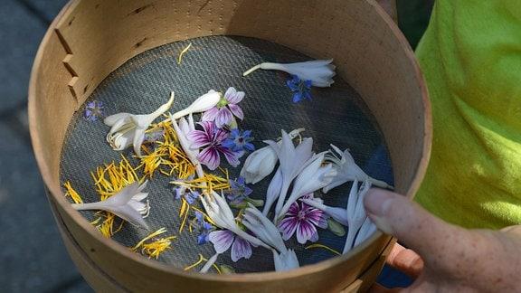 In einem Sieb liegen verschiedene Blüten