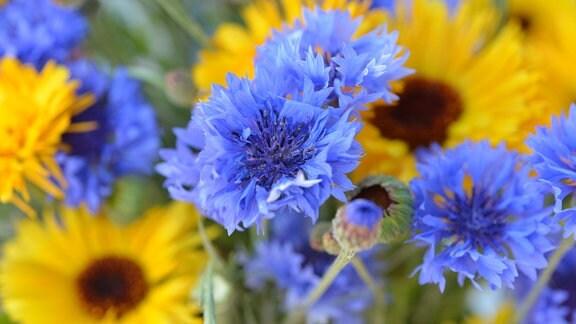 Ringelblumen und Kornblumen in einem Strauß