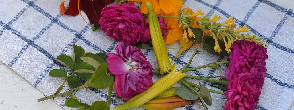 Ganz und zu Extrem Essbare Blüten: Rose, Kornblume & Co.   MDR.DE @OQ_53