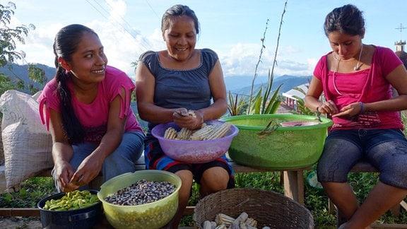 Maisernte in den Sierra Norte Mountains nördlich von Oaxaca. Diese Maissorten sind vom Verschwinden bedroht.