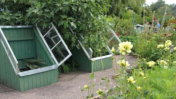 Schräge Kästen mit Fensterläden als Gewächshäuser des Kleingartenmuseums Landskrona in Schweden.