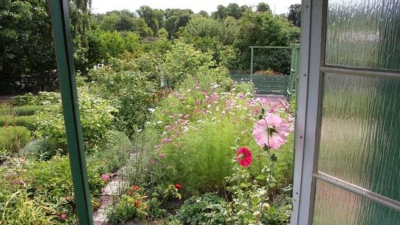 Blick von der Veranda des Kleingartenmuseums Landskrona in den Garten.