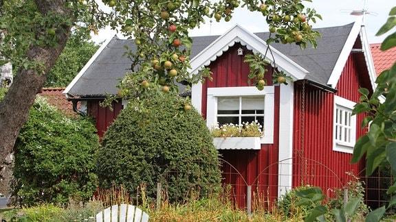 Ein rotes Gartenhaus mit Apfelbaum in der Kleingartenkolonie Landskrona in Schweden.