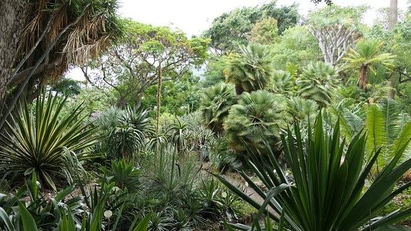 Parkimpression des Botanischen Gartens in Puerto de la Cruz (Teneriffa)