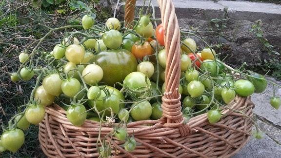 Korb voller grüner Tomaten