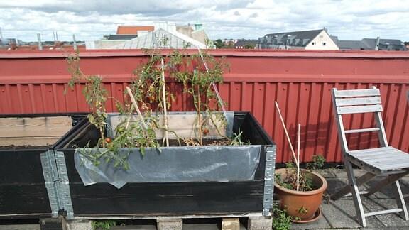 Ein rollbares Hochbeet mit Tomaten auf einer Dachterrasse in Malmö in Schweden.