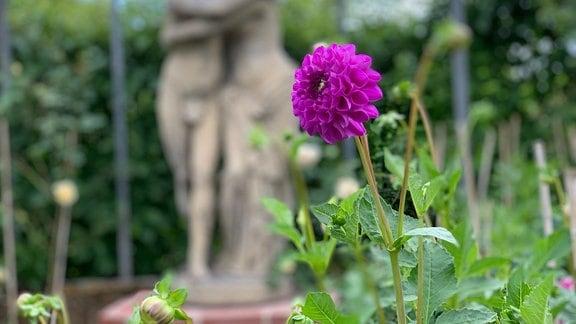 Blick in den Garten Ulbrich in Solingen.