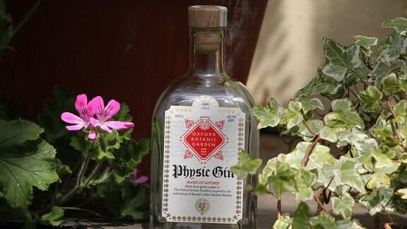 Eine Flasche Gin steht neben Efeu auf einem Vorsprung.