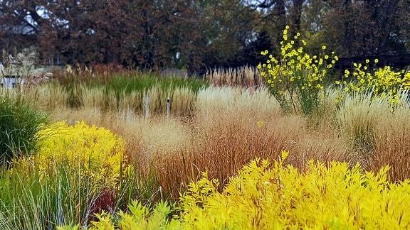 Herbtfärbung im Gräsergarten egapark