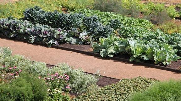 Gemüsebeet mit Blumen und Salat im Küchengarten von Schloss Gunnebo.