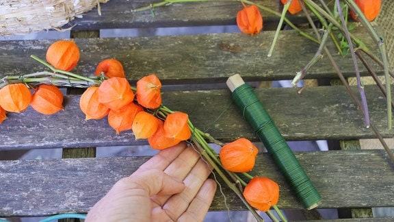 Lampionblumen werden mit Blumenbindedraht an einen Drahtreifen gebunden.